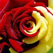 Grupa pielgrzymkowa czerwono-żółta